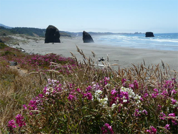 Oregon's beautiful dunes.