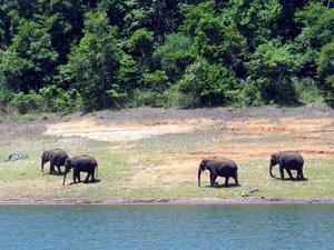 Elephants in India. photo courtesy of Travellers Worldwide.