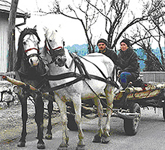 Horsecart transportation.