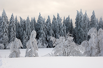 Scene from the Black Forest in Germany