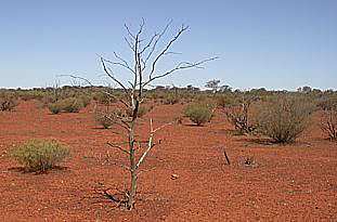 Australia's dry climate in which John McDouall Stuart and his men traveled.