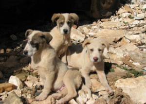 Puppies in Greece. photo by Inside/out.