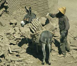 A working donkey at the ruins of Bam