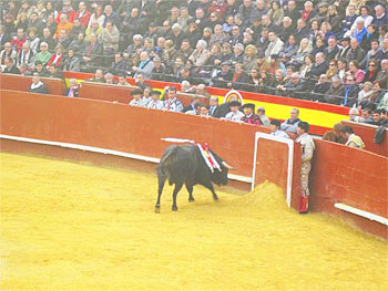 The matador retreats behind a barrier.