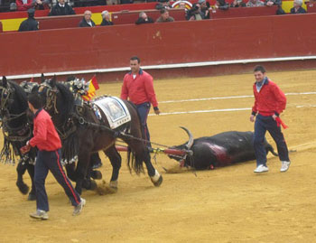 The dead bull is dragged out of the ring.