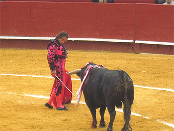 The stare down between man and bull