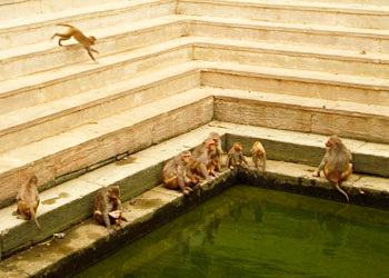 Monkeys now stake claim to the upper pond once used by people.