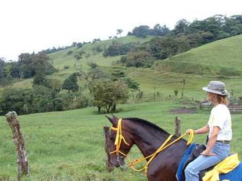 Mulo surveys the landscape. horseback