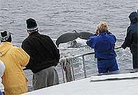 A whale watching expedition.