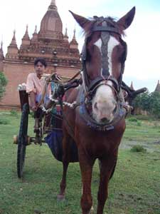 Pony cart in New Bagan