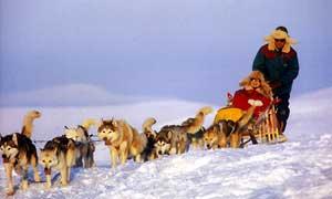 Dogsledding in Lapland
