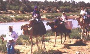 Riding camels in Morocco
