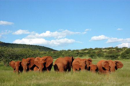 Elephants near the Sossusvlei Wilderness Camp