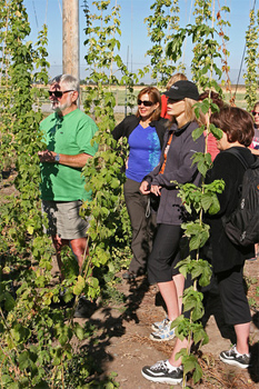 Amidst the hops: learning all about beer on the Yellowstone/Grand Teton Multi Beer Adventure from Zephyr Adventures.