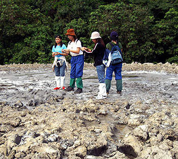Mud Volcano at Tabin Reserve, Borneo.