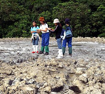 Mud Volcano at Tabin Reserve, Borneo.