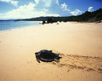 Turtle Island, Borneo.