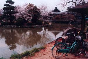 A bike by a koy pond in Kyoto.