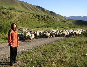 Rush hour in the Tian Shan Mountains - photos by Jessica Hayden