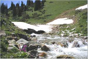 A mountain stream in the Tien Shan Mountains