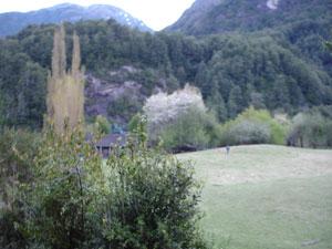 Patagonian meadow