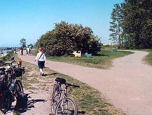 The Riverside Dog Park