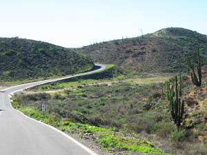 Winding road through lush desert greenery
