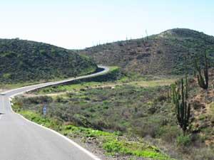 Winding road through lush desert greenery
