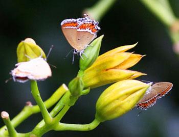 Butterflies up close.