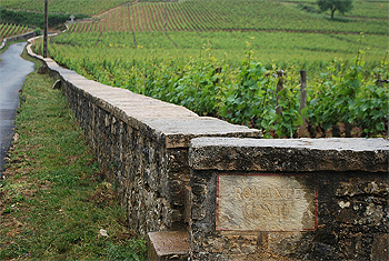The fabled Romanee Conti vineyards--home of the world's most expensive bottles of wine.
