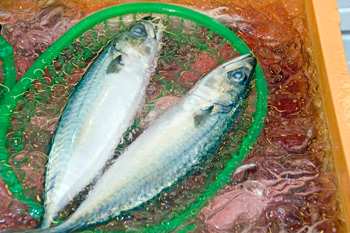 Fish at Omicho Market