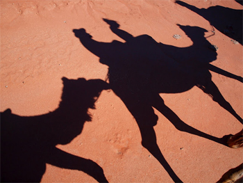Camel shadows on the Pyndan Camel Tracks near Alice Springs.