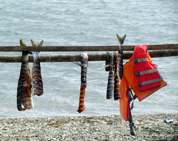 Fish drying on a rack in Nome.