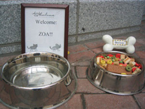 Some hotels, like the Hotel Marlowe in Cambridge, Massachusetts, offer all kinds of amenities for visiting pets.