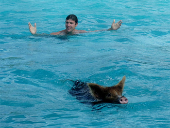 Will McGough swims with pigs in the Bahamas.