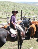 Lauren Axelrod rustling cattle