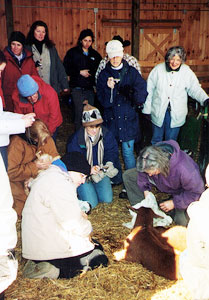 Our group of kidding volunteers waits patiently for a pregnant goat to give birth.