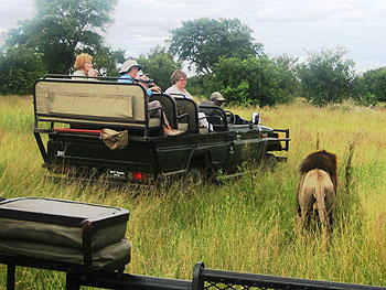 A game drive at the Djuma Game Reserve.