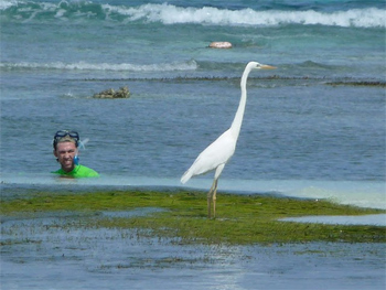 Egret next to a snorkler on the beach in Cancun, Mexico. photos by Cindy Bigras.