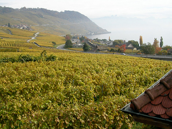Lavaux Vineyards on Lake Geneva.