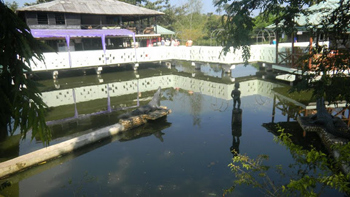 Crocodile pond in Ghana.