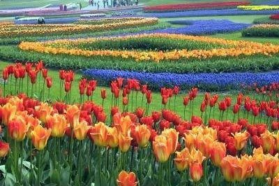 Flowers on display at Floriade, Amsterdam's annual spectacle.