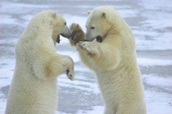 Norway's Svalbard Archipelago: The Land of the Ice Bear