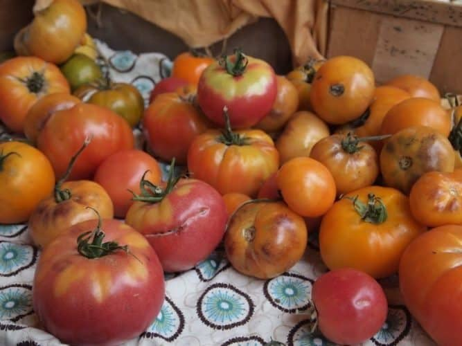 Heirloom tomatoes for sale at a Vermont farm.