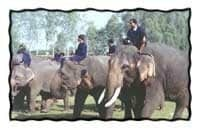 Take a Load Off: Adopt an Elephant