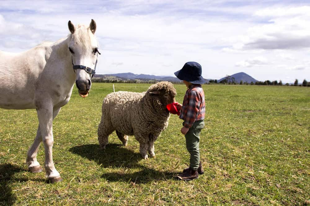 Staying on a farm is a popular pastime for many families.
