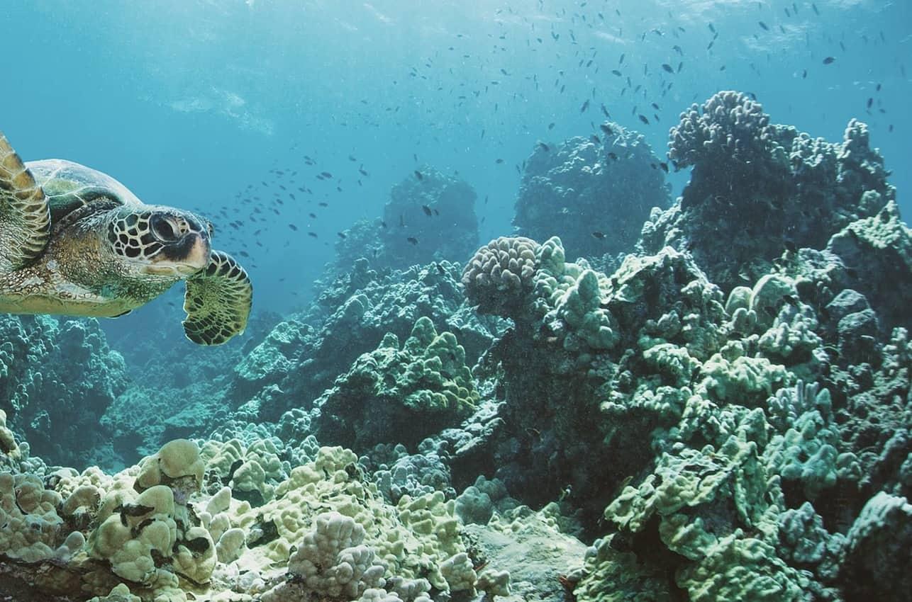 A sea turtle at Sian Ka'an, Mexico. Amigos photo.