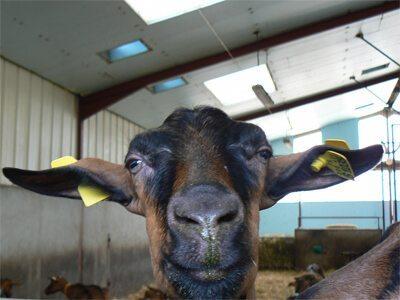 Down on the Farm: Farmstays Around the World