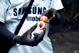 Nutmeg taken from the Kizimbani farm in Zanzibar.