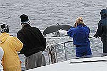 Orcas of the Western Atlantic